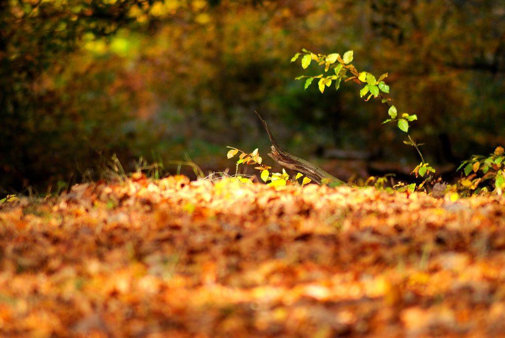 Herbstlicher Blätterboden; Foto: Jochen Buchholz