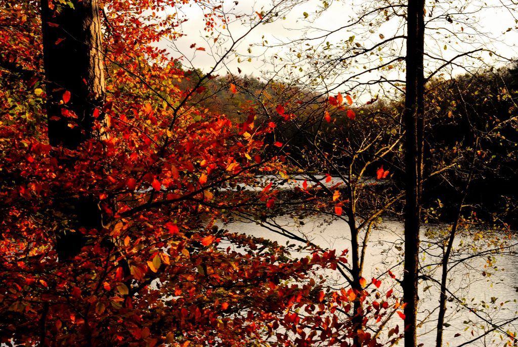 Herbst-Dickicht; Foto: © Jochen Buchholz