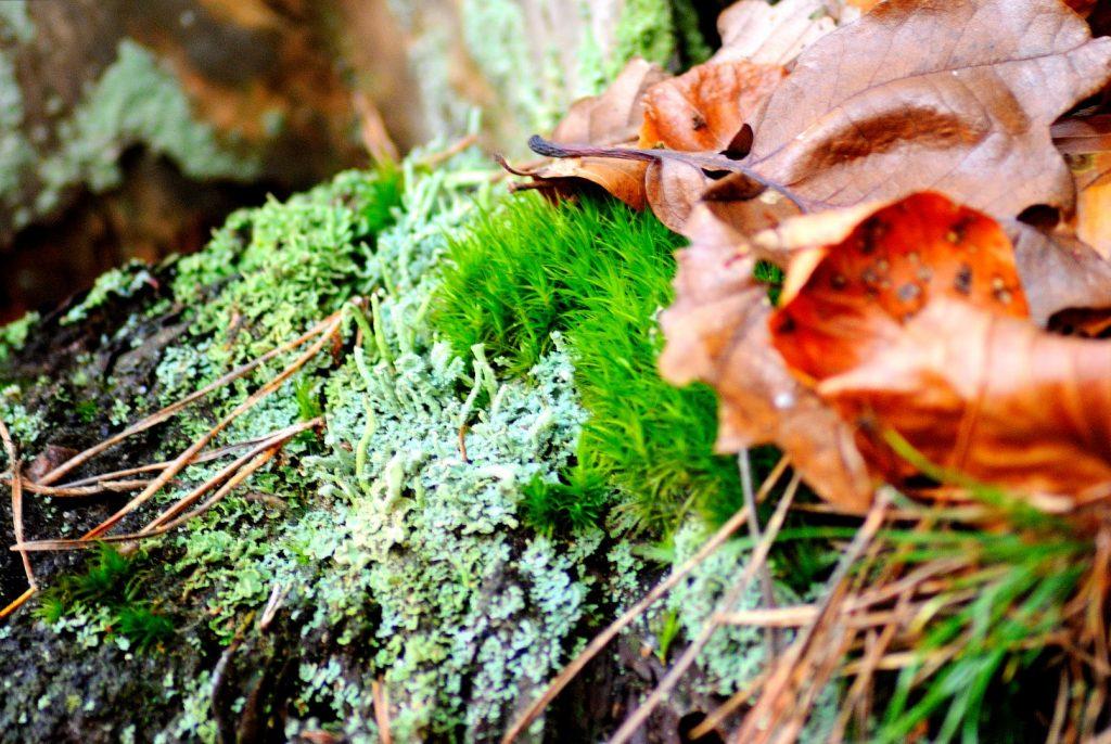 Detailaufnahme Herbstboden; Foto: Jochen Buchholz