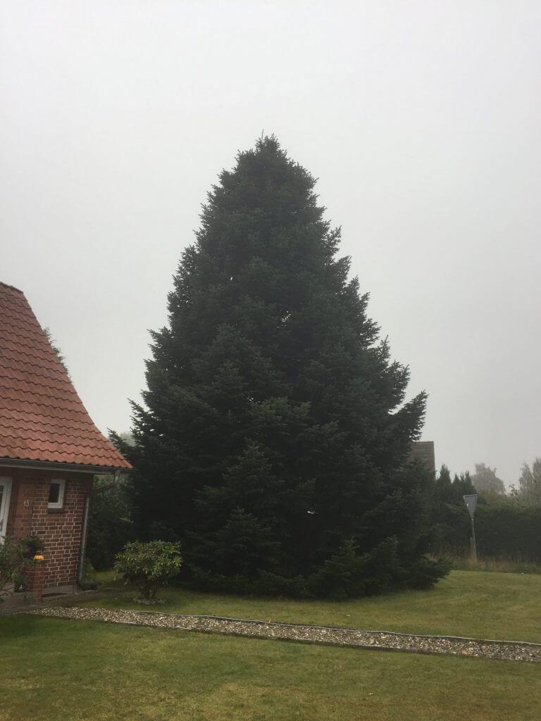 Baum geunden in Nusse