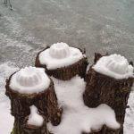 Kuchen auf Baumstümpfen