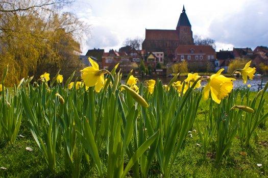 Frühlingsfoto von Thomas Ebelt