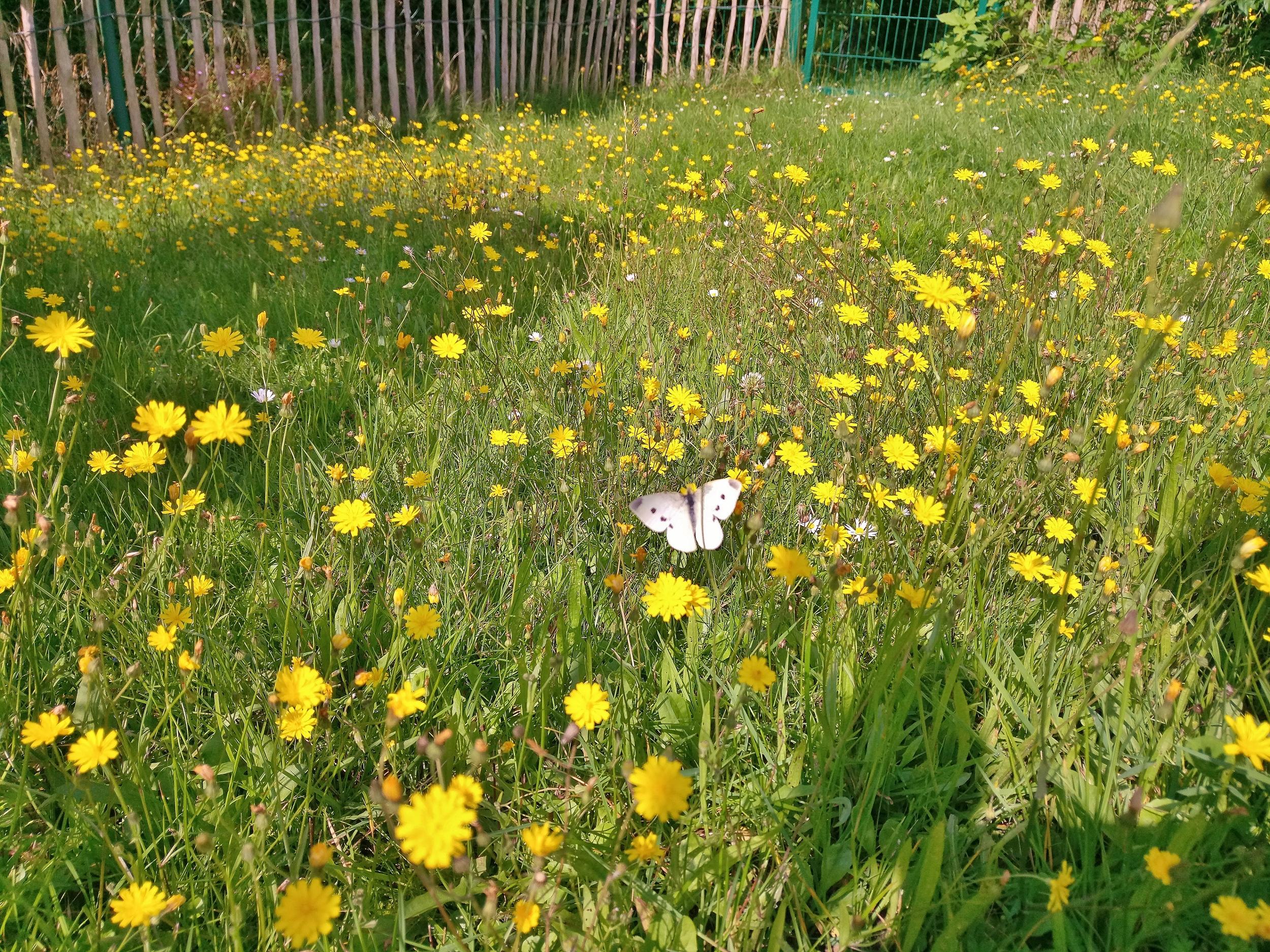 Ab durch die Hecke – ThoBis Garten-Blog