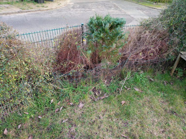 Ab durch die Hecke – ThoBis Garten-Blog Teil 3