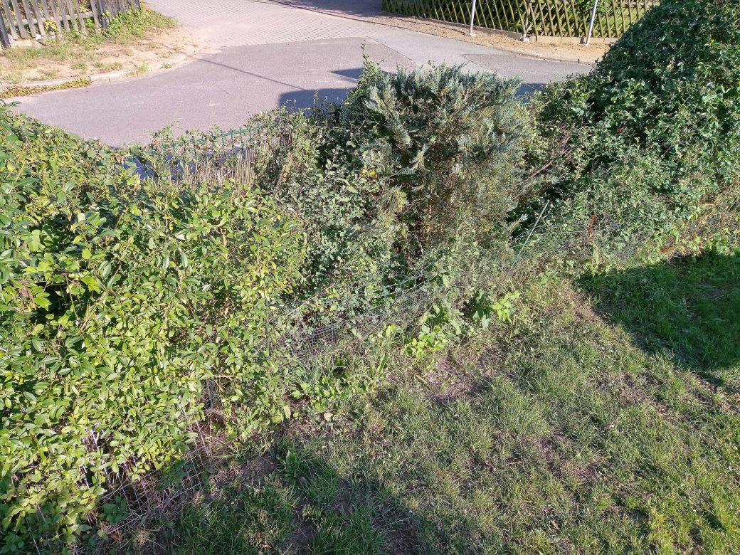 ThoBis Problem-Hecke