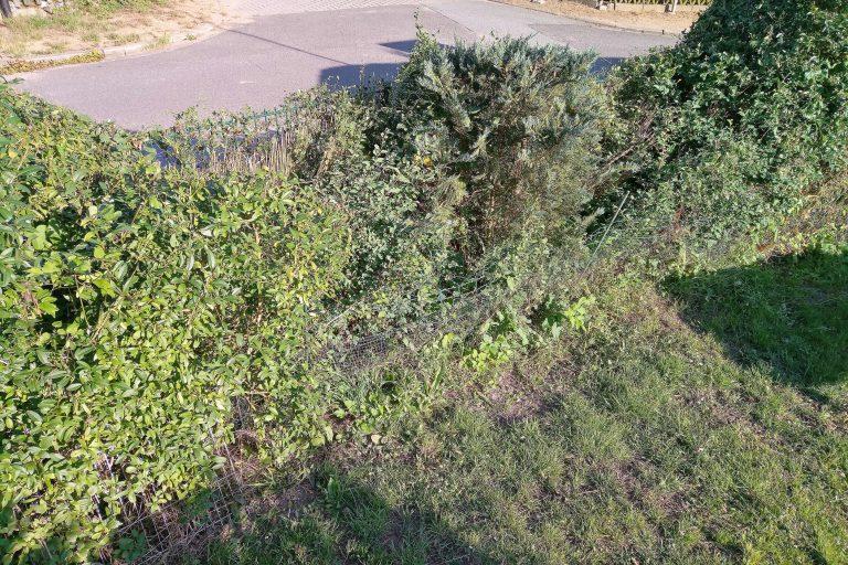 Ab durch die Hecke – ThoBis Garten-Blog Teil 1