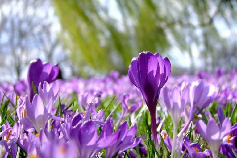 Top 7 Aktivitäten im Frühling